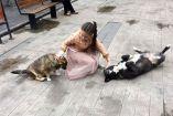 """რატომ უკეთია ძაღლს ყურზე ბირკა და რას ნიშნავს """"ძაღლის მიკედლება"""""""