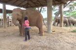 ტაილანდის ნაკრძალში სპილოებმა იავნანას ხმაზე დაიძინეს