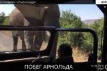 არნოლდ შვარცნეგერს სპილო გამოეკიდა