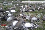 ნორვეგიაში მეხის ჩამოვარდნის შედეგად 323 ირემი დაიღუპა