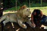 ლომებმა ეს პატარა გოგონა პრაიდის  წინამძღოლად აირჩიეს