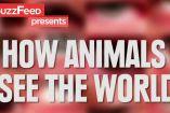როგორ ხედავენ ცხოველები სამყაროს