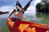 მამაკაცმა დაჭრილი ზღვის ფრინველი გადაარჩინა, მას შემდეგ ისინი განუყრელი მეგობრები არიან