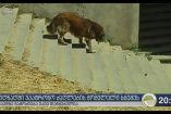 სიღნაღში მატილდა მირზოევა ქუჩის ძაღლის დაცვის გამო სასტიკად სცემეს