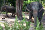 როდესაც სპილოებს უყვარხარ