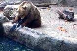 ცხოველები ერთმანეთის სიცოცხლეს უფრთხილდებიან! - ნახეთ ცხოველების მიერ ცხოველის გადარჩენის უნიკალური კადრები..