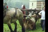 მსოფლიოში ყველაზე ძლიერი ტვირთმზიდი  ცხენი