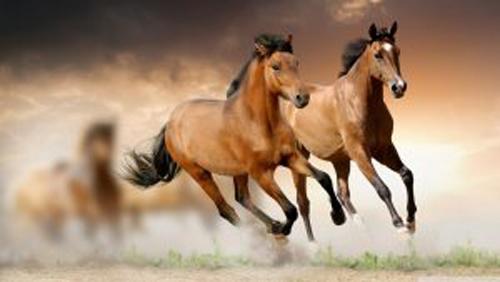 ახალტეკინური ცხენი-თურქმენეთის ნაციონალური სიამაყე