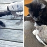 კაჭკაჭისა და კატის მეგობრობის საოცარი ისტორია (ემოციური ვიდეო)