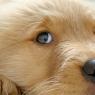 სპეციალისტებმა გამოიკვლიეს, თუ რატომ აქვს ჯანმრთელ ძაღლს მუდმივად ცივი ცხვირი