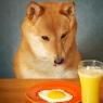 9 სასარგებლო პროდუქტი თქვენი ძაღლებისთვის