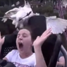 ატრაქციონზე გოგონას ფრინველი დაეჯახა (ვიდეო)
