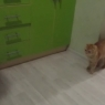 კატა პატრონს გასაქანს არ აძლევს… (+ვიდეო)