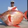 პირველად მეცნიერების ისტორიაში აღმოჩენილია თბილსისხლიანი თევზი