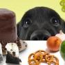 რამდენიმე საკვები პროდუქტი,  რომელიც ძაღლისთვის საზიანოა