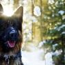 როგორი კვება სჭირდება ძაღლს ზამთარში