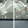 მშიერი თოლია ღვეზელის დიდ ნაჭერს მარტივად გაუმკლავდა (სახალისო ვიდეო)