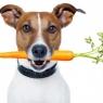 შეიძლება თუ არა ძაღლები იყვნენ ვეგეტარიანელები?