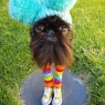 """""""კალმარი""""- გაბურძგნული და სასაცილო ძაღლი, რომელიც სოციალური ქსელების ნამდვილი ვარსკვლავია (სახალისო ფოტოები)"""