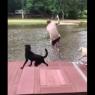 ძაღლები პატრონის გადასარჩენად ტბაში გადახტნენ  (ემოციური ვიდეო)