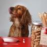 10 შეცდომა ძაღლის კვებისას