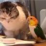 თუთიყუშისა და კატის სასაცილო დაპირისპირება, საკვების მოსაპოვებლად, პატრონმა კადრებზე აღბეჭდა (სახალისო ვიდეო)