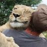 დასუსტებული ლომის ბოკვერი მშობლებმა მიატოვეს, მაგრამ ის კეთილმა ადამიანმა იპოვა