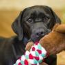 როგორ გავიგოთ ძაღლის სურვილები მისი ქცევების მიხედვით?