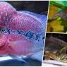 ყველაზე უჩვეულო შესახედაობის აკვარიუმის თევზები (18 ფოტო)