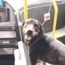 მანქანებით გადატვირთულ გზაზე დაბნეულ ძაღლს ყველა გვერდს უვლიდა... მხოლოდ ავტობუსის მძღოლმა გააჩერა მგზავრებით სავსე ტრანსპორტი