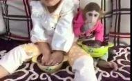 მაიმუნის ადამიანური რეაქცია, როცა ქურდობა არ გამოუვიდა