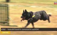 """გაიცანით """"განათლებული ქართველი ძაღლი"""" ბონი, რომელიც 50-მდე ბრძანებას ასრულებს"""