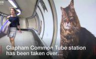 ლონდონის მეტროში თავშესაფრის კატების ფოტოები გამოჩნდა