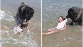 უზარმაზარი ძაღლი ბავშვის ტალღებიდან გამოყვანას ცდილობს  (+ვიდეო)