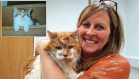 მსოფლიოში ყველაზე ასაკოვანმა კატამ 30 წლის იუბილე აღნიშნა