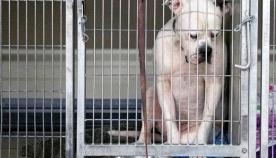 ძაღლი კუთხეში დაჯდა და თავი დახარა, როდესაც პატრონებმა ის თავშესაფარში დატოვეს