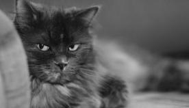 ახსოვს თუ არა კატას გაბრაზება?