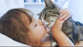ფსიქოლოგების დასკვნით, კატების სიყვარული ფსიქიკური ჯანმრთელობის ნიშანია