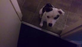 პატრონი ძაღლს წყლის თოფიდან  ესვრის, ცხოველის რეაქცია საოცარია (+ვიდეო)