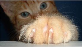 კატამ რომ შპალერისა და ავეჯის გადასაკრავები არ დახიოს