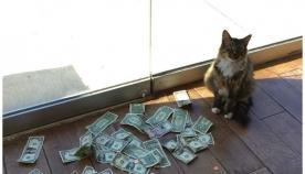 კატა, რომელიც ფულს დამოუკიდებლად გამოიმუშავებს და უსახლკარო ადამიანებს ეხმარება (+ვიდეო)