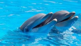 საფრანგეთმა დელფინების ტყვეობაში ყოფნა შეზღუდა
