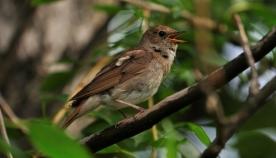 როგორ ნიშნავენ ტერიტორიას ფრინველები?