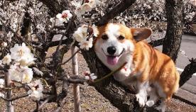 საგაზაფხულო ზრუნვა ძაღლზე