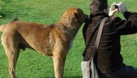 როგორ მოქმედებს ადამიანის განწყობასა და ჯანმრთელობაზე ძაღლთან ურთიერთობა?