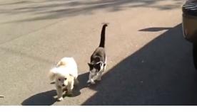 კატა უსინათლო მეგობარ ძაღლს  სახლამდე მისვლაში ეხმარება (+ვიდეო)