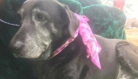 20 წლის ძაღლმა პატრონს ერთგულება და სიყვარული საფლავის კარამდე დაუმტკიცა