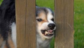 როდის იკბინება ძაღლი