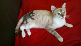 კატა სასეირნოდ მარტო გავიდა, მაგრამ სახლში ოპოსუმთან ერთად დაბრუნდა