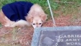 ერთგული ძაღლი მოხუცი პატრონის საფლავს არ ტოვებს (ემოციური ვიდეო)